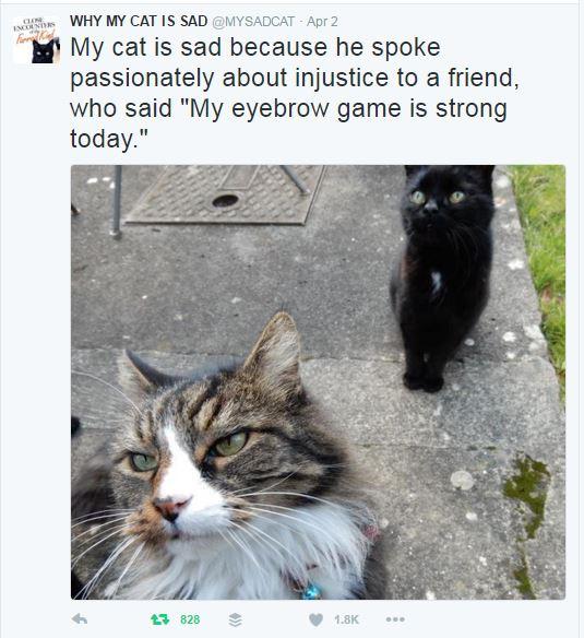 my sad cat